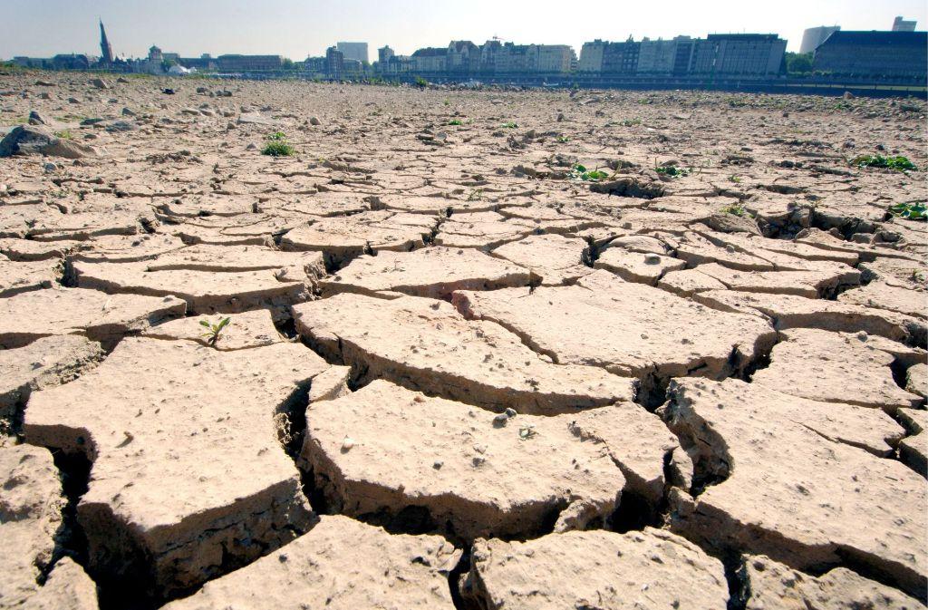 Das ist nicht die Sahelzone, sondern das Rheinufer bei Düsseldorf. Entstanden ist das Foto Ende Juni 2005,  als  Hitze und Dürre das Land im Griff hatte und den Boden aufbrechen ließ. Foto: dpa