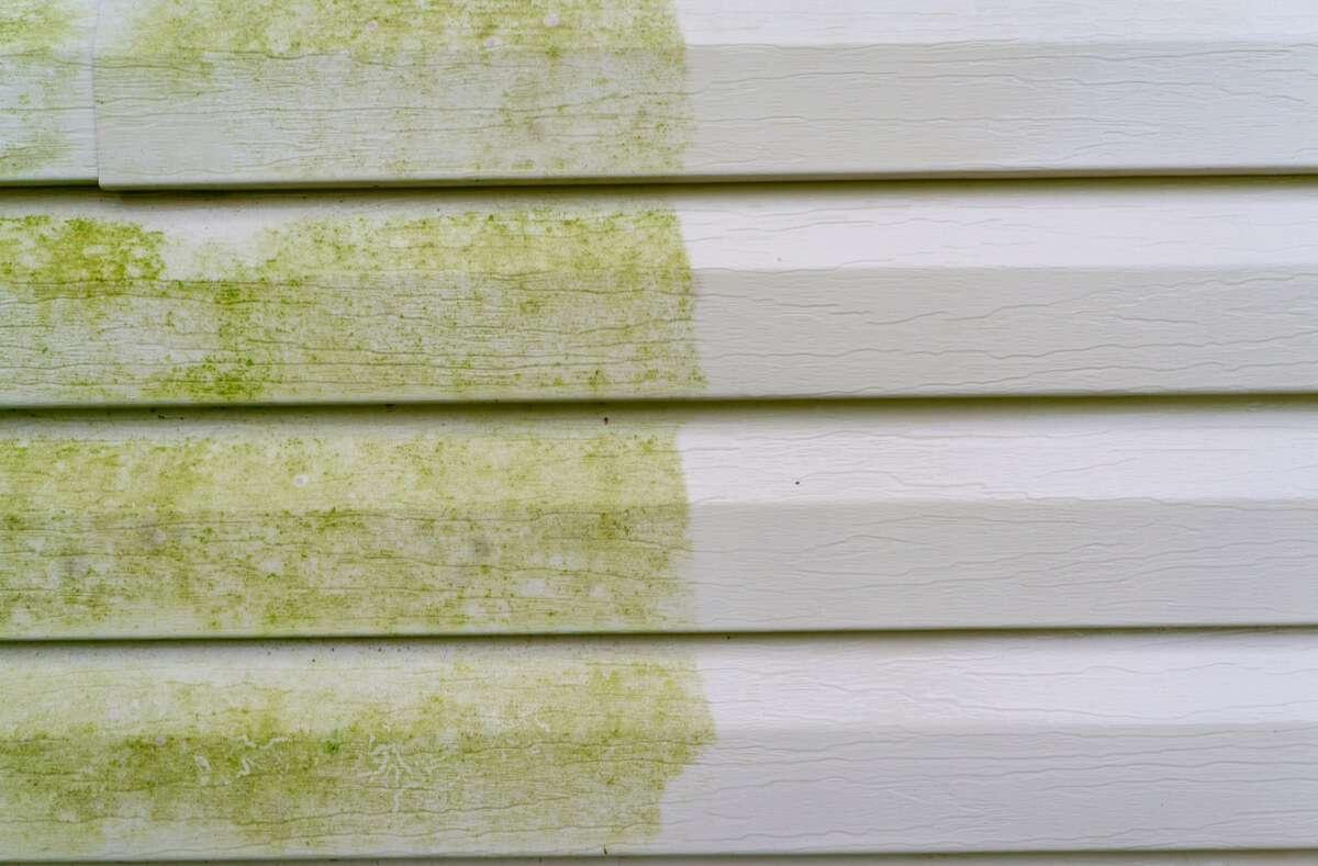 Grünbelag kann den Anblick im Garten ziemlich trüben. Hier zeigen wir Ihnen 6 Methoden, um Grünbelag zu entfernen. Foto: Indy Edge / Shutterstock.com