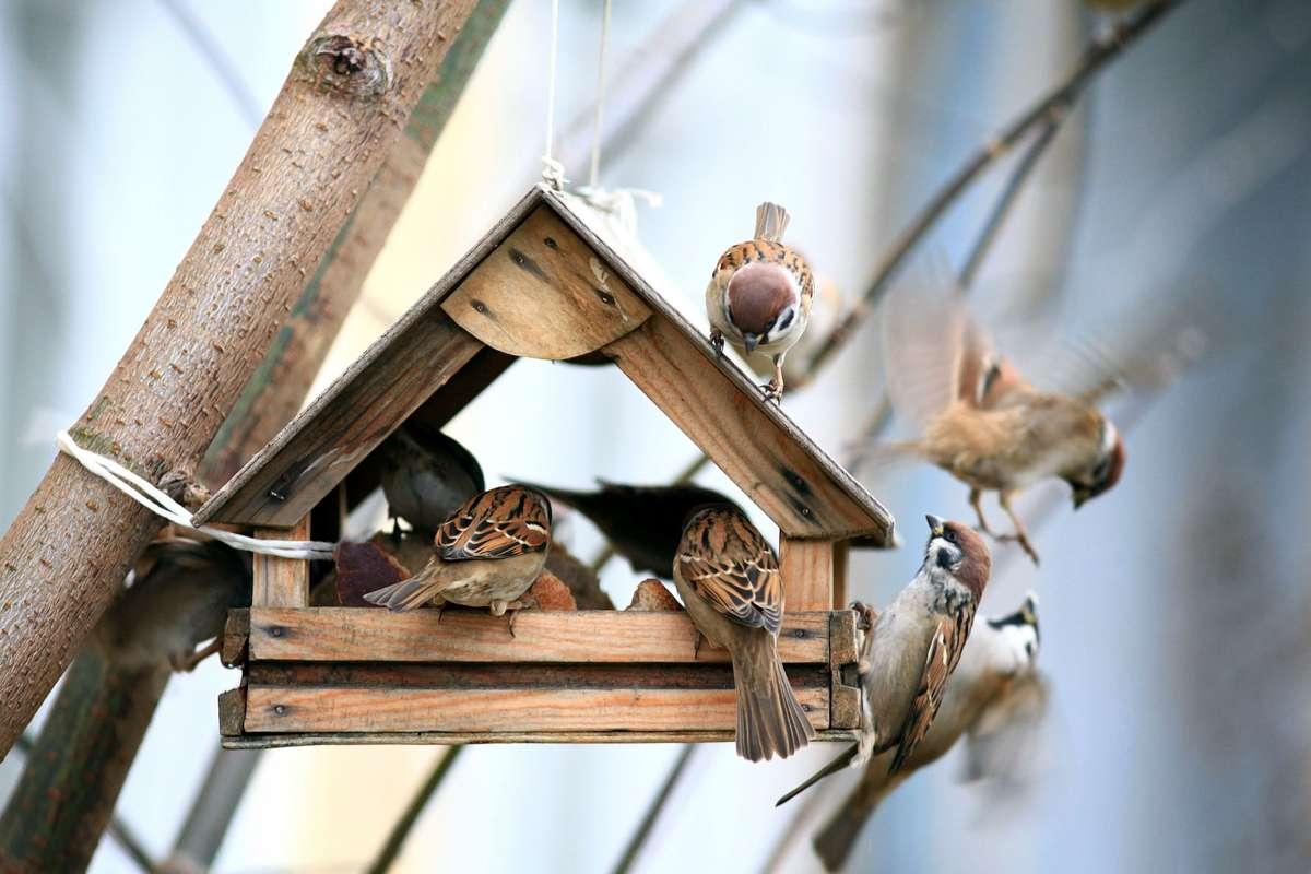 Ab wann kann man Vögel füttern? Foto: Kichigin/Shutterstock