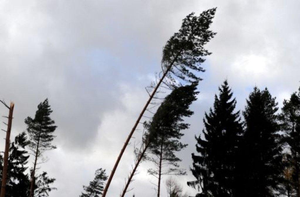 Bäume im Sturm - in Baden-Württemberg war von Xaver nur wenig zu spüren. Foto: dpa
