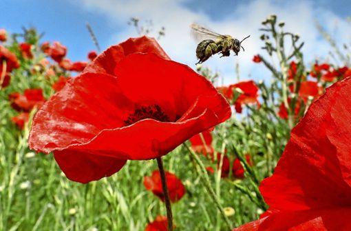 Bienenretter setzen ihr Volksbegehren aus