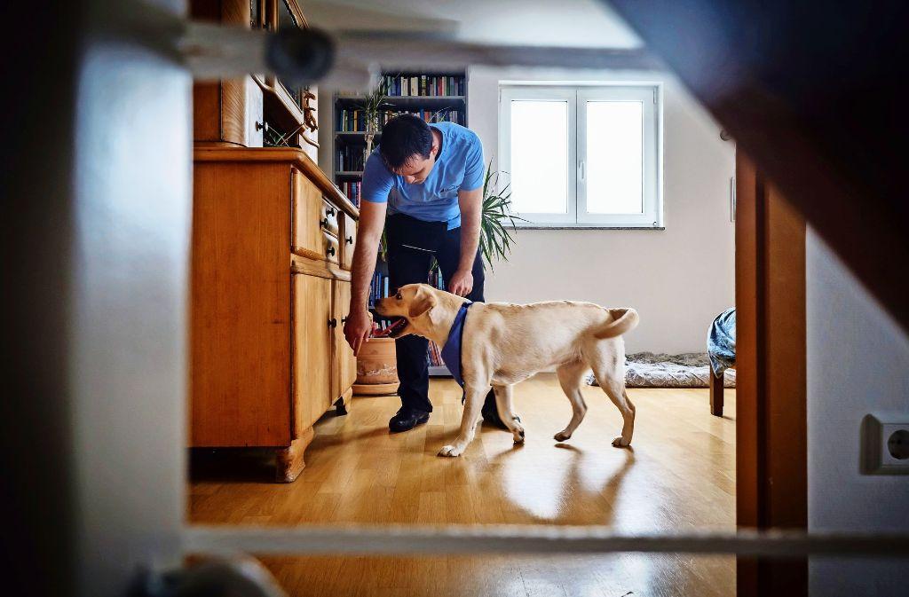 Das blaue Halstuch  signalisiert, dass  sich der Schimmelsuchhund Emily gerade im Einsatz befindet. Foto: Lichtgut/Achim Zweygarth
