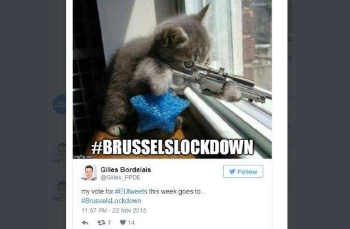 Mit Katzen gegen den Terror