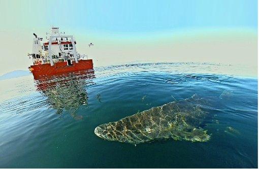 Methusalem im Eismeer