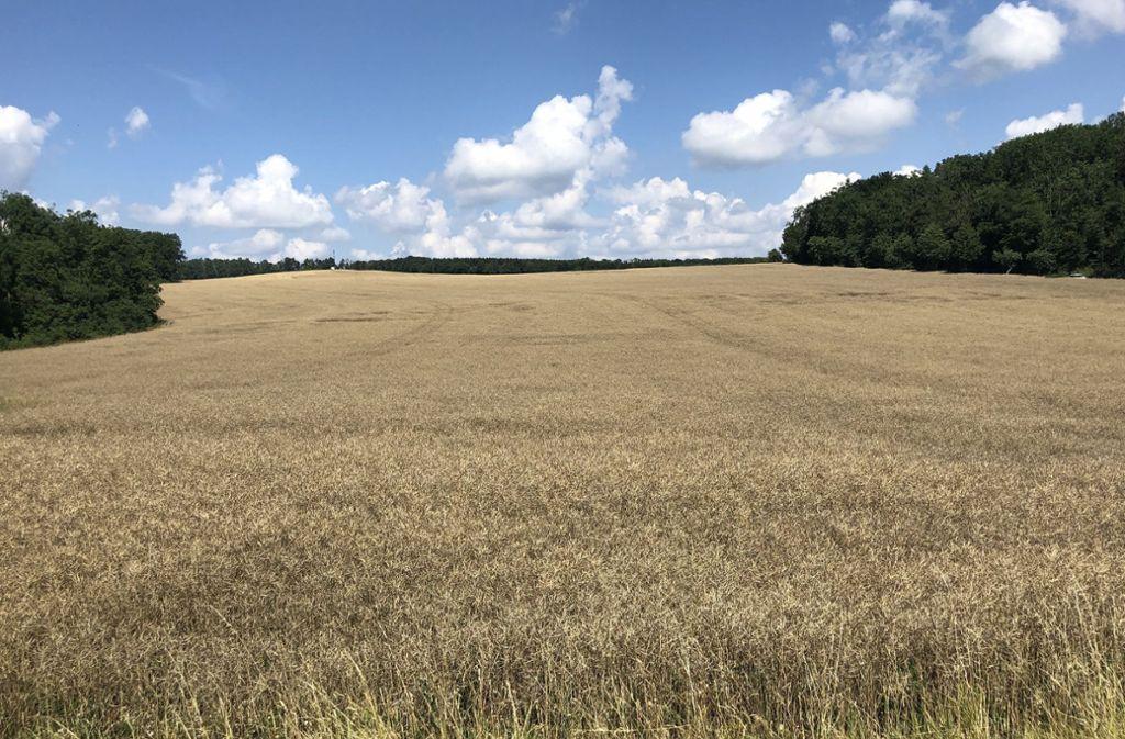 In den kommenden Tagen wird die restliche Ernte eingefahren. Foto: Philipp Braitinger