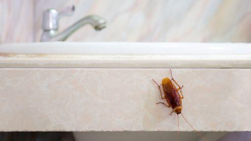 Wie kann man Kakerlaken bekämpfen?