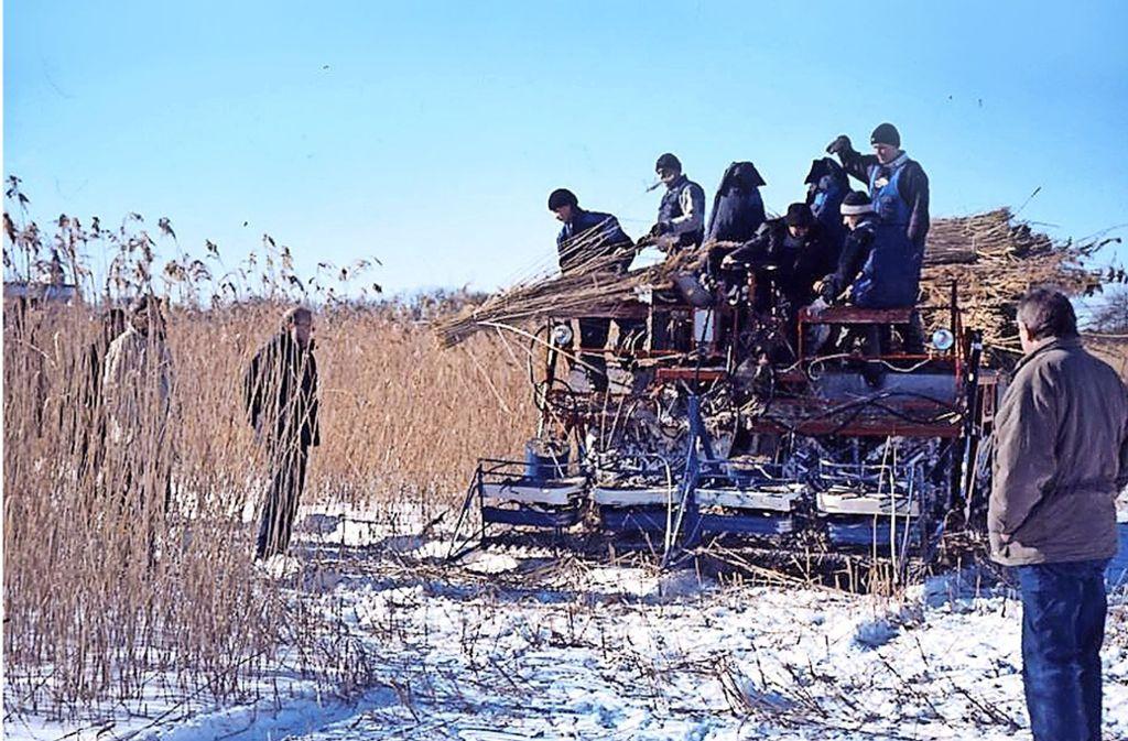 Wenn die Seen  gefroren sind, wird  mit einer Schilfmähmaschine  geerntet. Foto: Heim-statt Tschernobyl