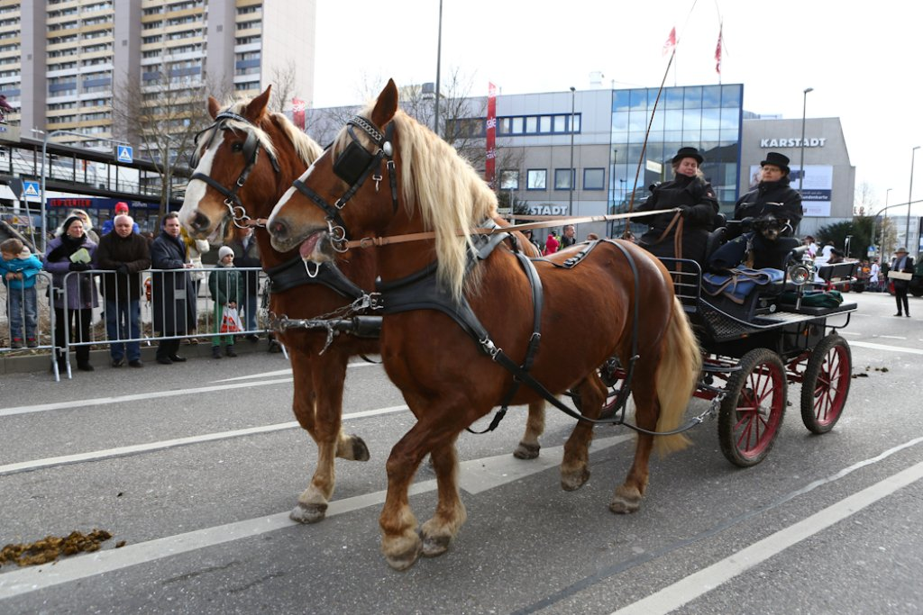 Der diesjährige Leonberger Pferdemarktumzug Foto: Benjamin Beytekin