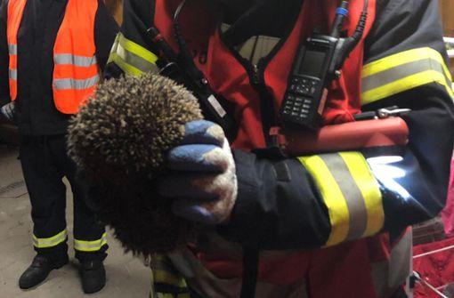 Igel unter Schwerlastregal eingeklemmt – Feuerwehr im Einsatz