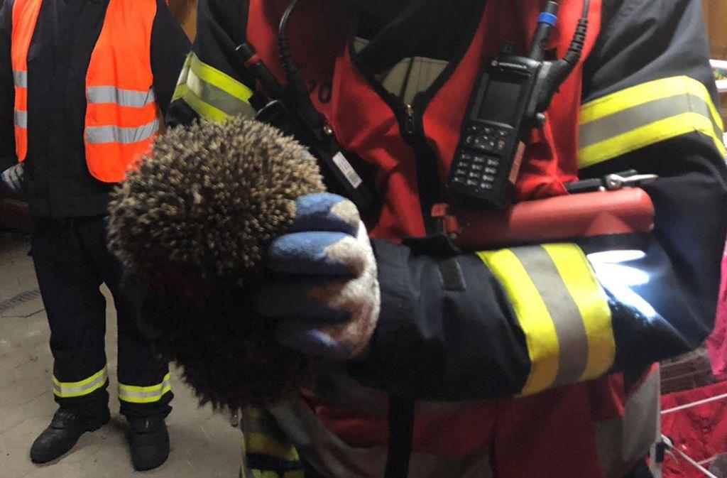 Die Feuerwehr in Werne rückte wegen einem eingeklemmten Igel aus. Foto: dpa