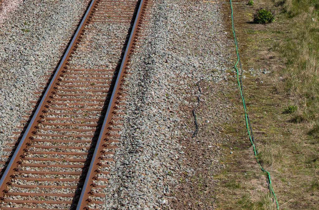 Am Sonntagmorgen stand das Tier auf den Gleisen, wurde von einem Zug erfasst und getötet (Symbolfoto). Foto: dpa/Peter Byrne