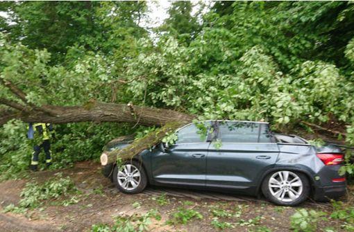 15 Meter hoher Baum stürzt auf Auto