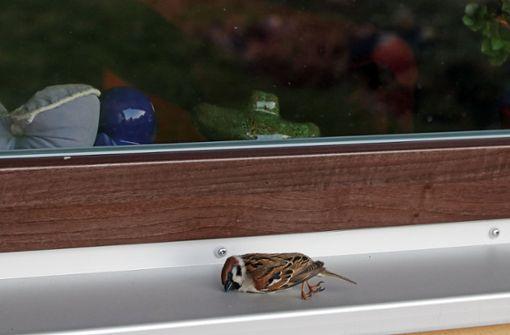 Wie kann man Vögel vorm Glasscheiben-Tod schützen?