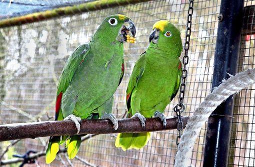 Freier Eintritt für die Papageienretter