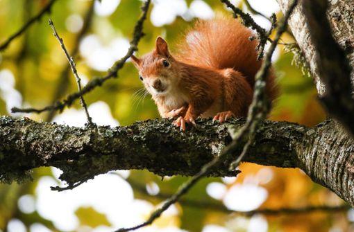 Zu viel Radau für Igel und Eichhörnchen