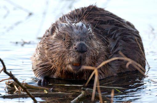Bestände großer Süßwasser-Tiere schrumpfen um 90 Prozent