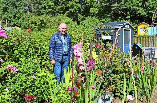 Gartenserie teil 6 kleingartenverein leinfelden so mancher baut auch unkraut an landkreis - Kupka garten ...