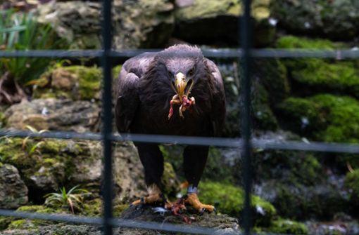 """""""Der dich auf Adlers Fittichen  geführet"""""""