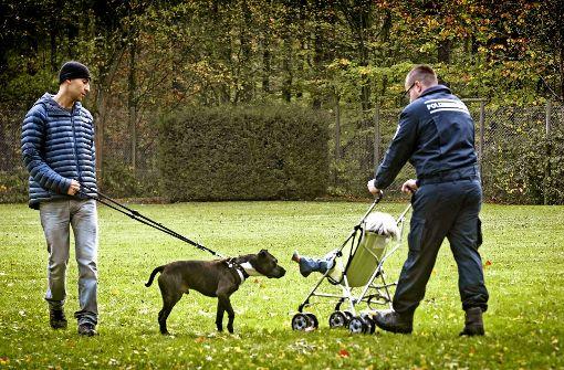 Kampfhunde sind in Mode und landen oft im Tierheim