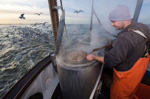 Rasanter Temperaturanstieg in der Nordsee