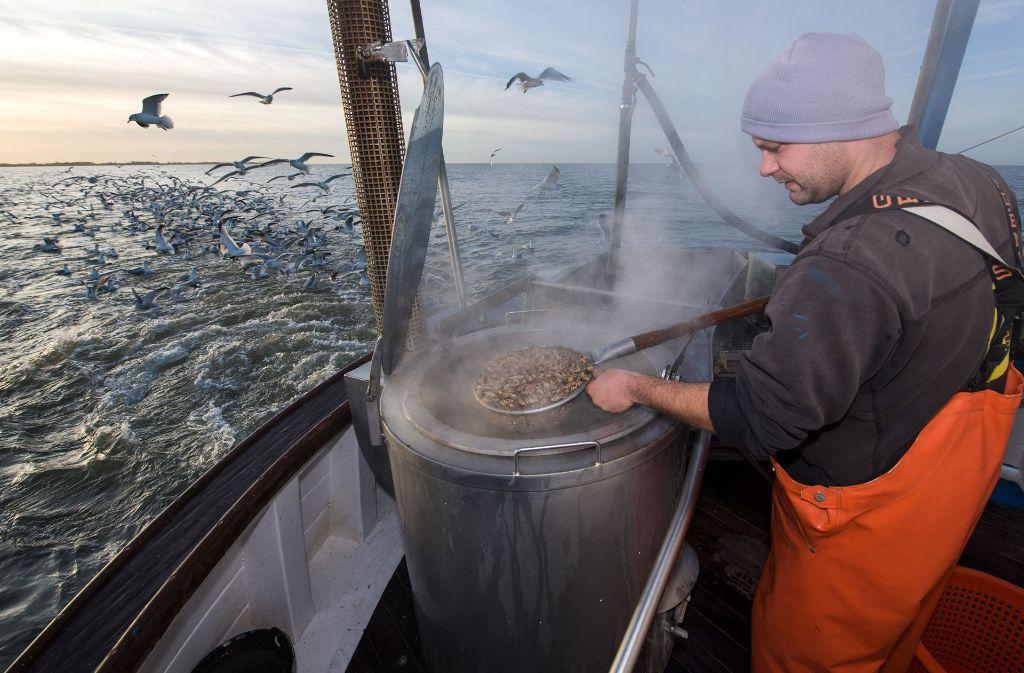 Schon jetzt sind Krabben in der Nordsee selten geworden. Foto: dpa