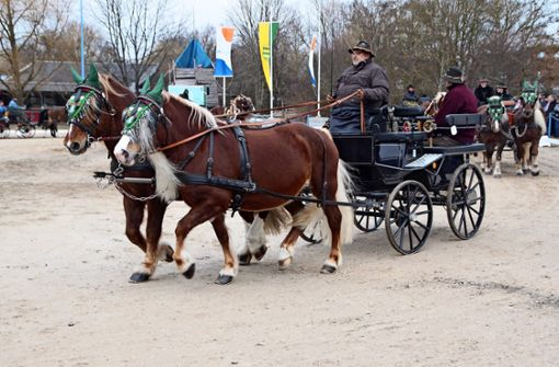 Esel stehlen Pferden teilweise die Schau