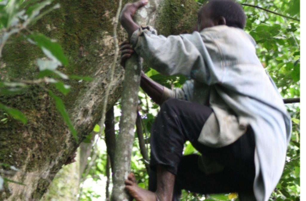 Theoretisch könnten Menschen auf Bäumen laufen. Foto: Nathaniel  Dominy