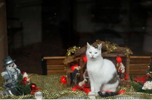 Eine Katze kann eine Krippenlandschaft sehr beleben. Foto: dapd