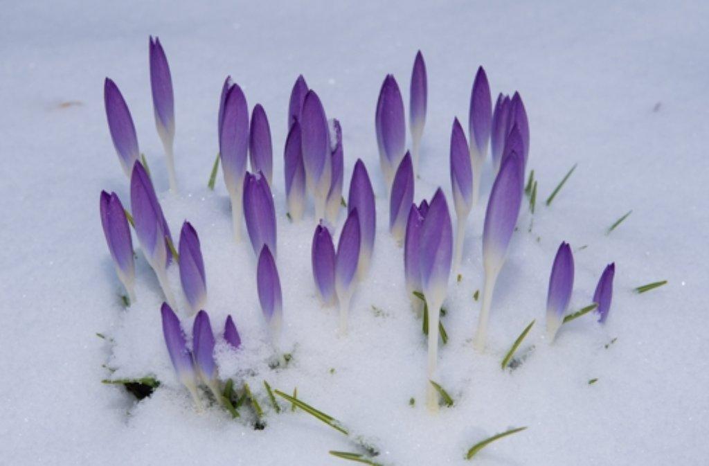 Wann kommt der Frühling nach Stuttgart? Foto: dpa-Zentralbild