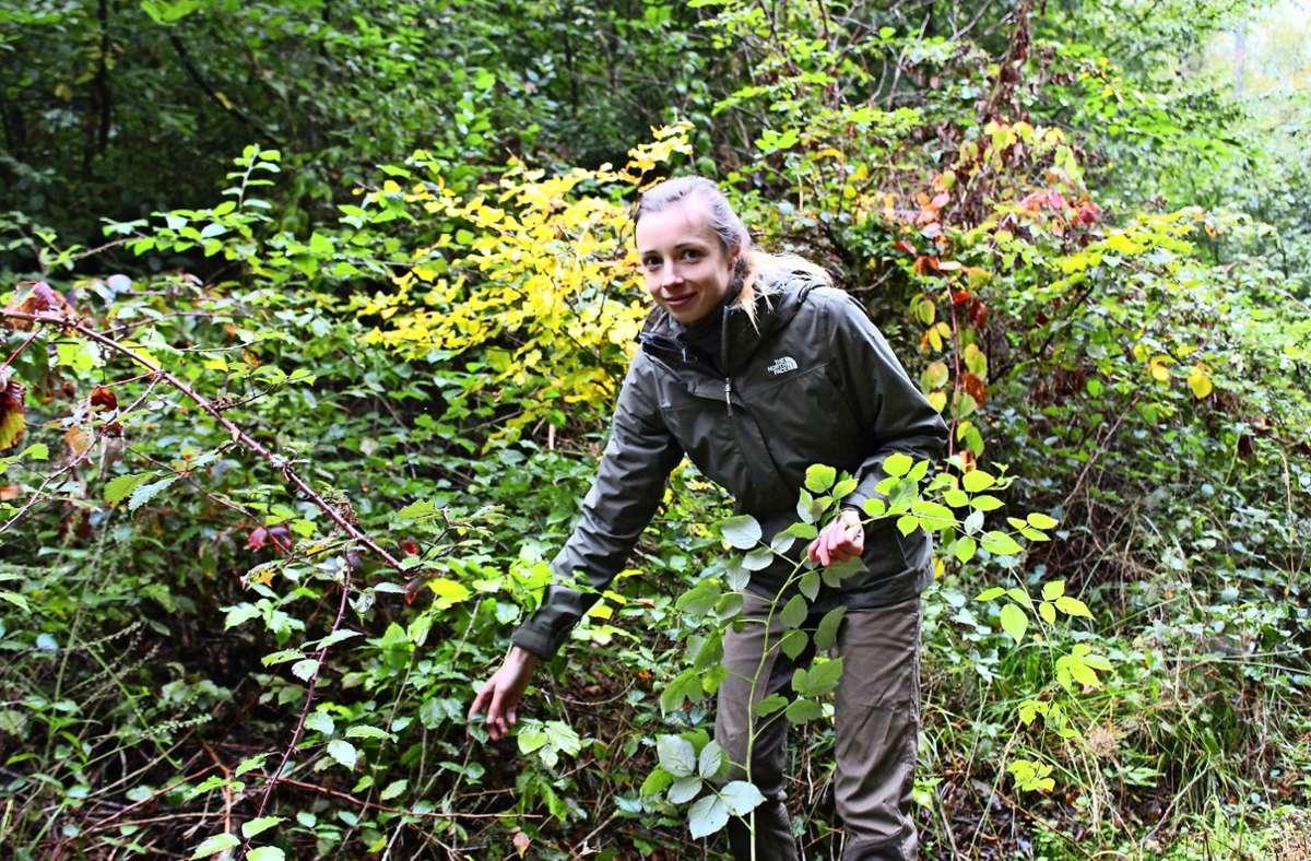 Annika Richter macht gerade den Jagdschein. Dafür muss sie auch wissen, wie Blätter einzelner Baumarten aussehen. Foto: Jacqueline Fritsch