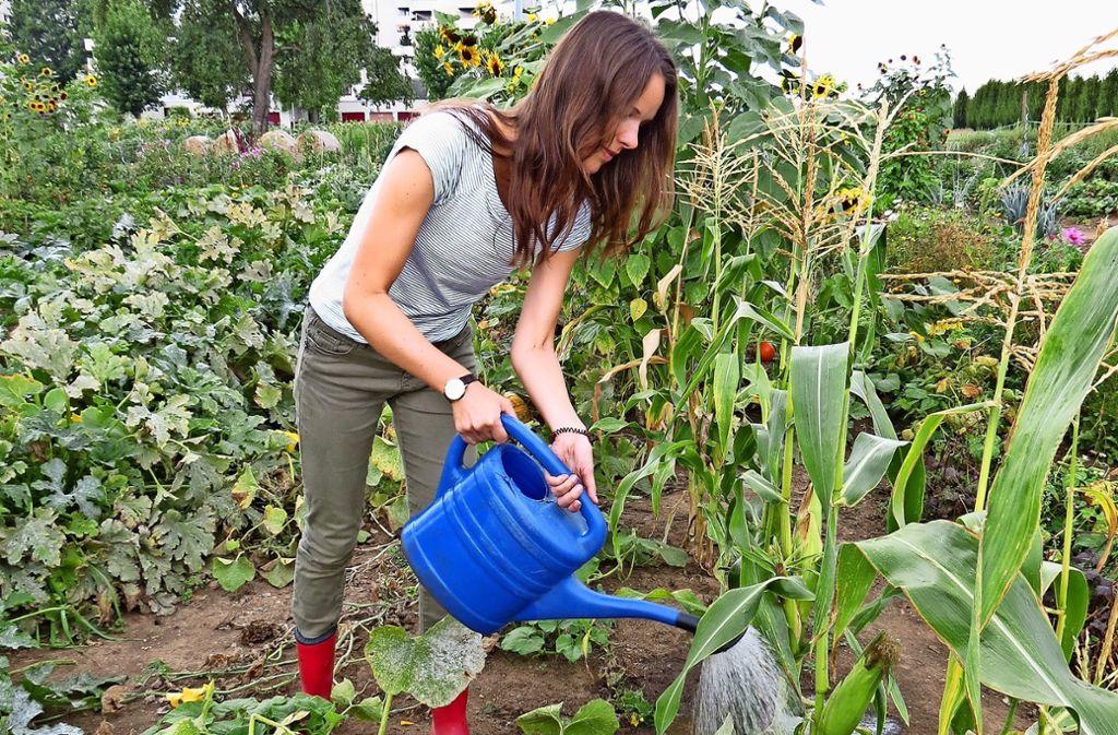 Julia Bosch weiß nun, dass großblättrige Pflanzen mehr Wasser brauchen. Foto: R. Fritzsche