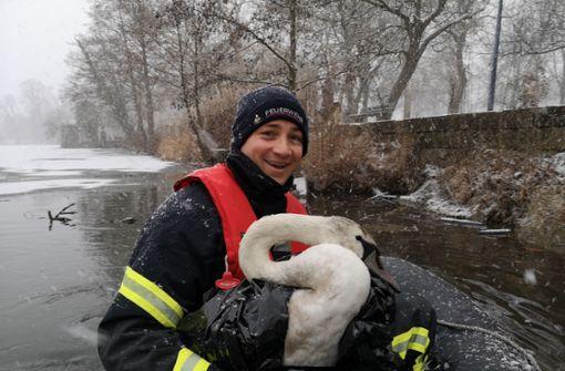 Feuerwehr fischt eingefrorenen Schwan aus See