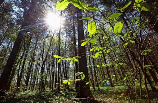 Das Ziel ist ein naturnaher Wald