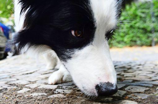 Anwohner wegen Giftködern für Hunde alarmiert