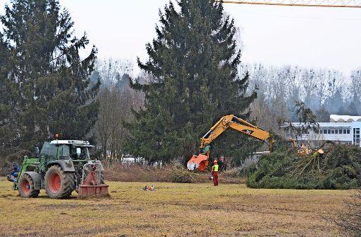 Bäume weichen für Firmenumsiedlung