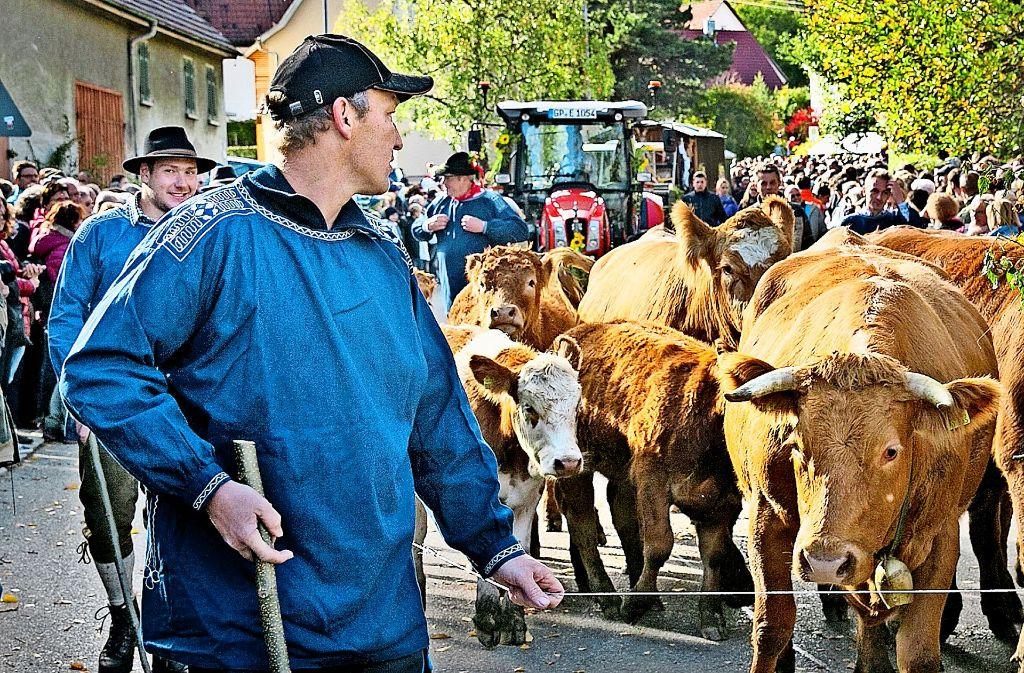 Beim Almabtrieb stehen die Tiere im Mittelpunkt. Foto: Horst Rudel