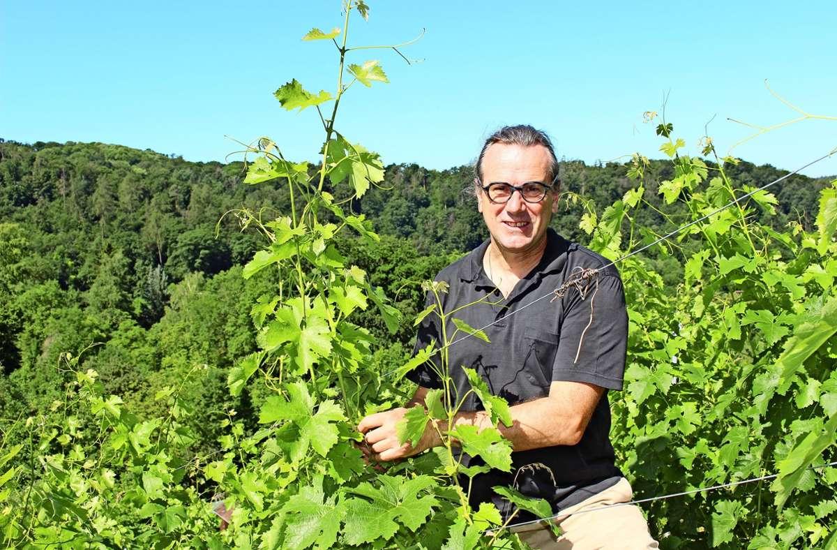 Bernd Kreis  – Ende Juni – in seinem Weinberg am Scharrenberg. Er baut dort unter anderem die Sorte  Cabernet Franc an. Foto: Caroline Holowiecki