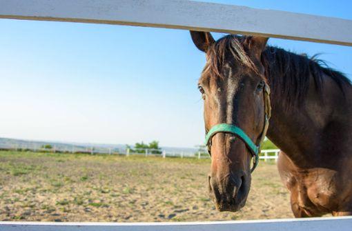Entlaufene Pferde werden von Zug erfasst und tödlich verletzt