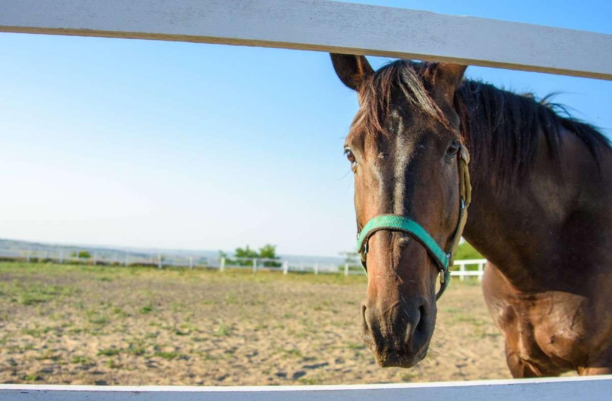 Drei Pferde entkamen von einer Koppel und wurden von einem Zug erfasst. (Symbolbild) Foto: imago images/Shotshop/Madhourse