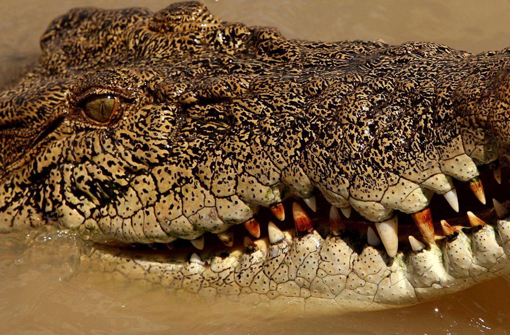 Der Fischer wehrte sich gegen den Krokodilangriff. (Archivbild) Foto: AFP/GREG WOOD