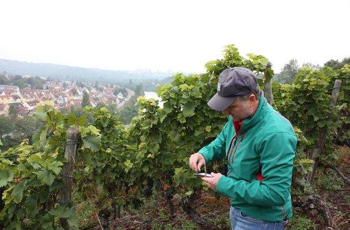 Sonnige Tage und kalte Nächte für guten Wein