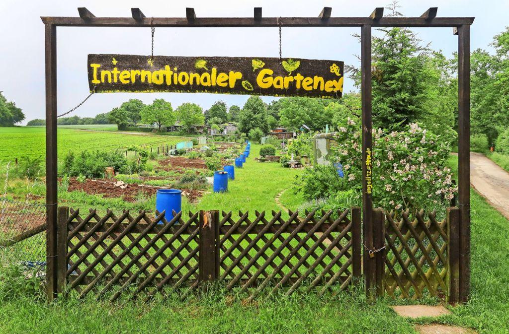 Der Internationale Garten: Hier bauen Menschen aus 13 Nationen ihr Gemüse an. Foto: factum//Simon Granville/Archiv