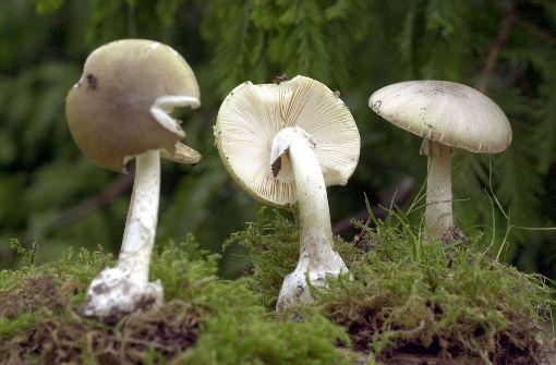 Mehr Vergiftungen durch Pilze