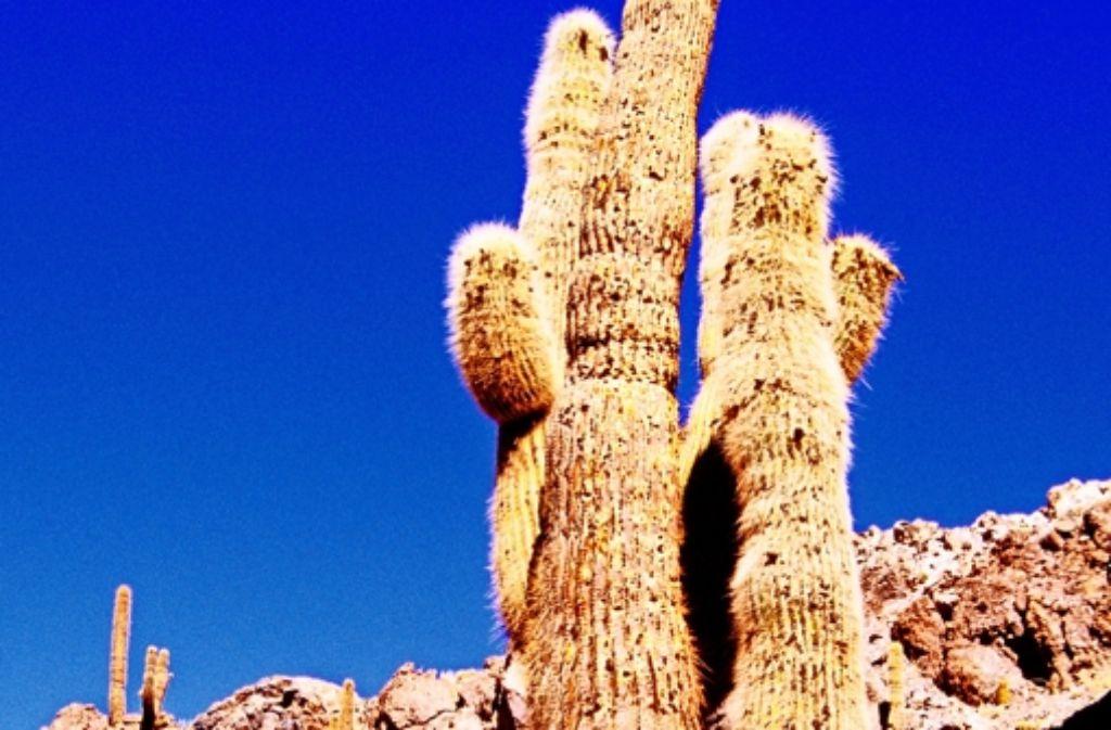 Die Atacama-Wüste ist einer der trockensten  Orte der Welt. Foto: dpa
