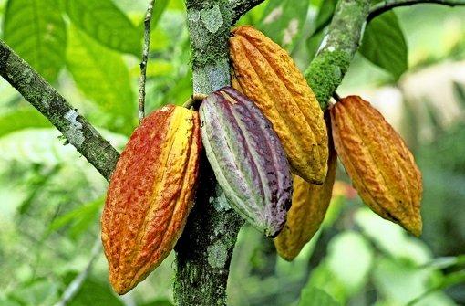 Eine Bohne mit Potenzial: Kakao Foto: dpa