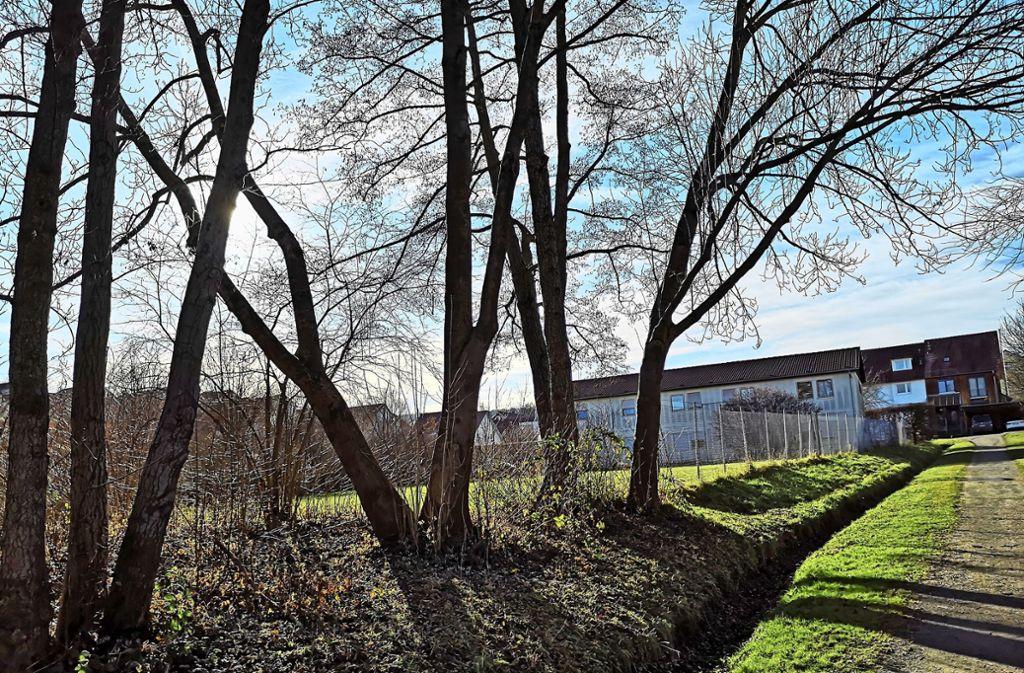 Hinter den Bäumen, auf dem Bolzplatz an der Seestraße, soll ab Mai das neue Gebäude der Sozialstation entstehen. Foto: Hans-Dieter Wolz