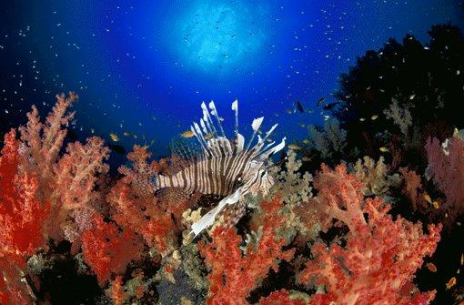 Im großen Unterwasserland