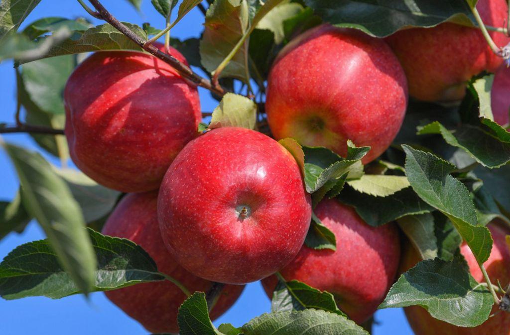 Beim Äpfelsammeln ist im Rems-Murr-Kreis ein Senior dreist beklaut worden. Foto: dpa