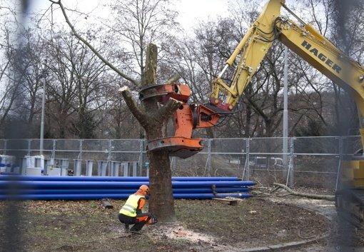 Baumrodung im  Schlossgarten Foto: dapd