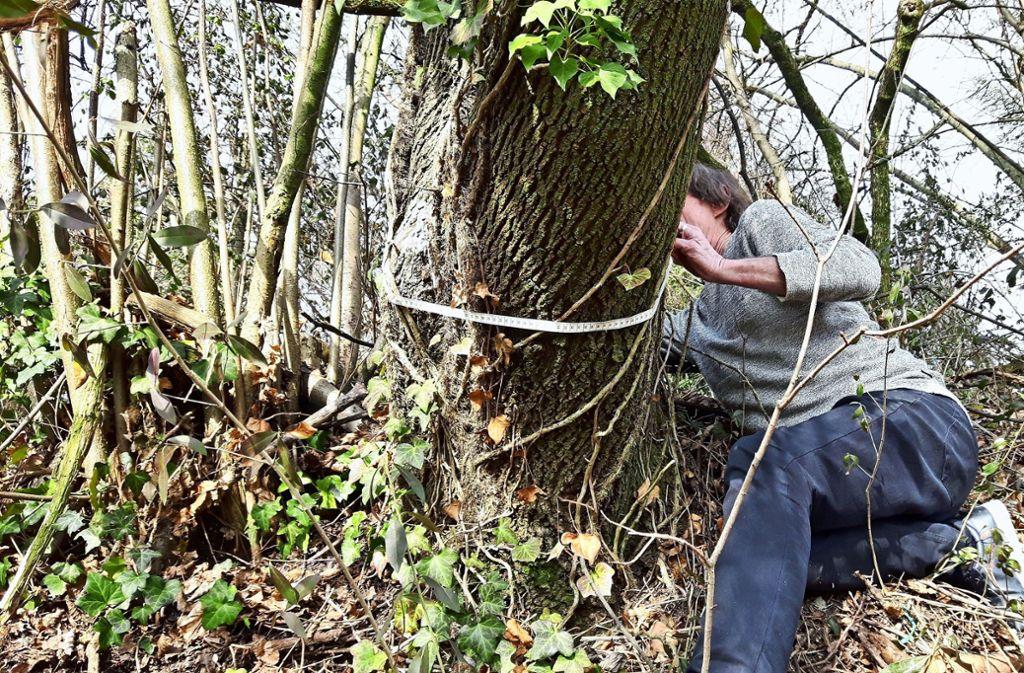 """""""Weit mehr als 80 Zentimeter Umfang"""": ein Anwohner vermisst einen  Baum Foto: Eva Funke"""